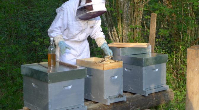 Un rucher à la Saisiaz